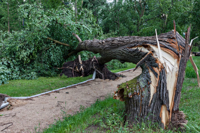 downed-tree-960x640