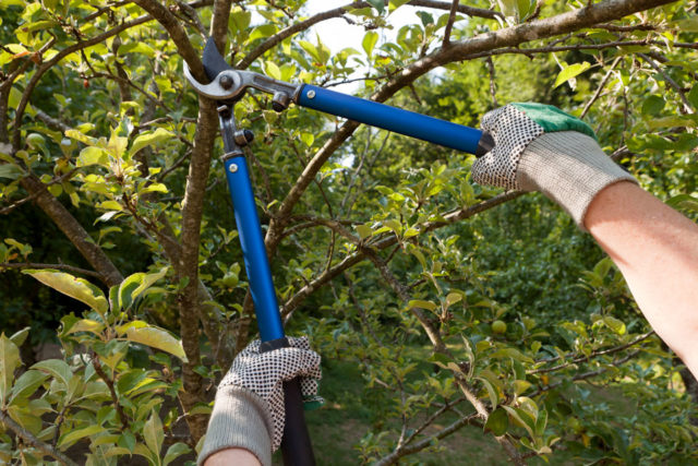 pruning-960x640