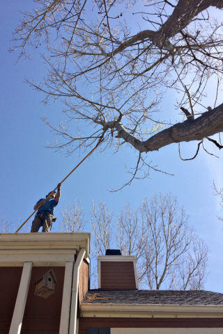 roof-branch-trimming-720x1080