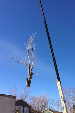 tree-removal-crane-640x960